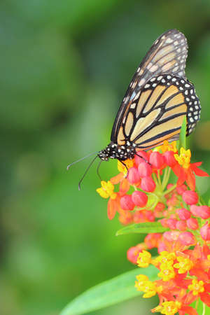 butterfly Stock Photo - 14258367