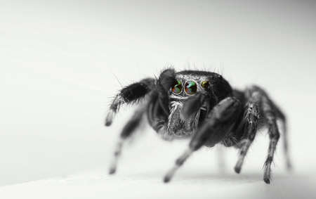 Jumping Spider Stock Photo - 15498813