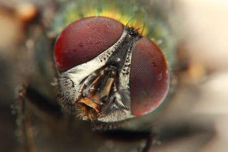veiny: macro insect