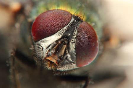 veiny: macro de insectos