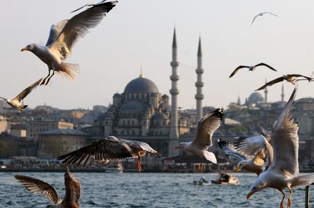 Seagulls in Istanbul photo