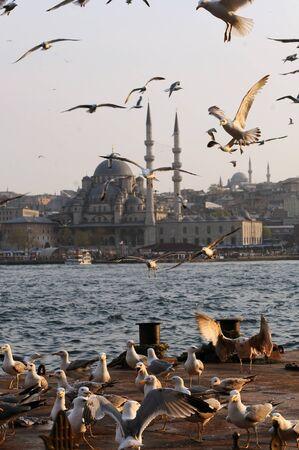 bosphorus: Seagulls in Istanbul