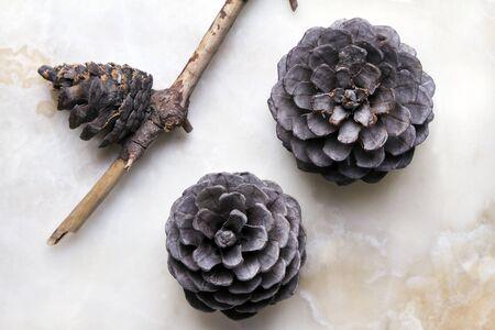 pine cone: pigna