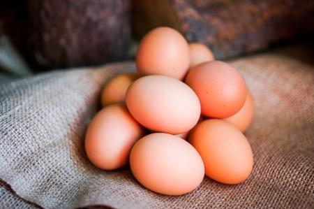 농장 제기 갈색 계란