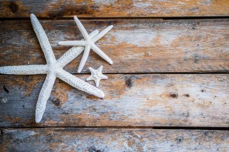 etoile de mer: étoile de mer