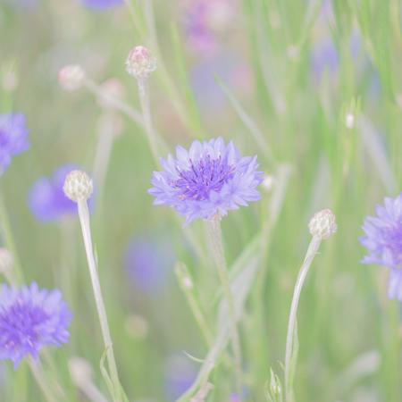 flores color pastel: flores en colores pastel