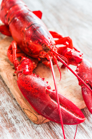 lobster photo