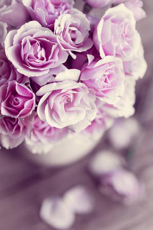 Pastel roses Stock Photo