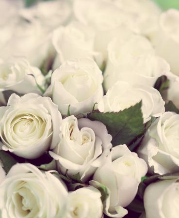 Pastel witte rozen Stockfoto