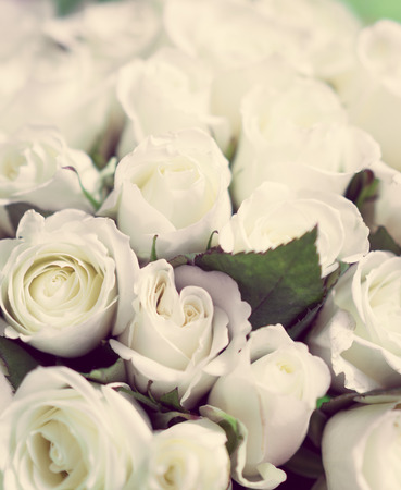 Pastel white roses