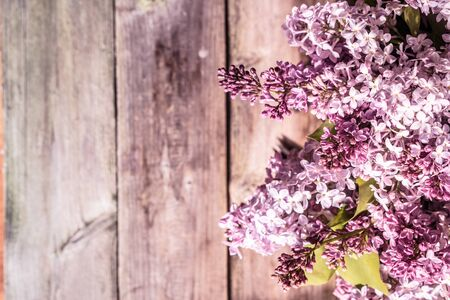 lilacs: Lilacs on wooden background