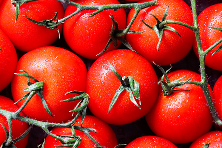 Closeup of raw tomatoes on the vine with water drops in macro