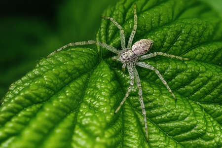 A little spider on the raspberry leaf
