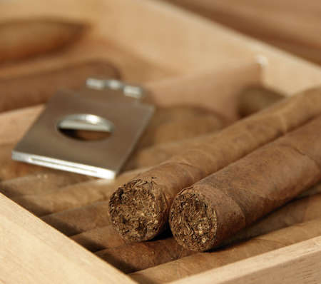 wood cutter: Cigars in humidor