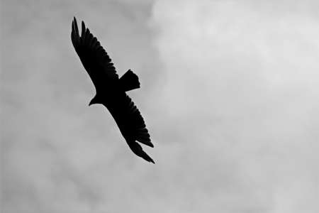 circling: The Vulture