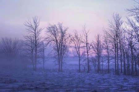 winter sunrise: Morning sun shining through the dense fog onto a winter landscape