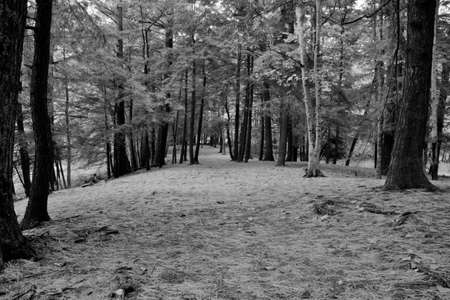 ludington: Wilderness Walk  A trail cuts through the heath of the northern woodlands  Ludington State Park  Ludington, Michigan