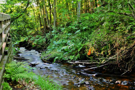 Babbling stream flows through the forest of Pictured Rocks National Lakeshore  Munising, Michigan  photo