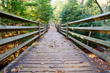 boardwalk trail: Boardwalk trail through the forest of Tahquamenon Falls State Park  Paradise, Michigan