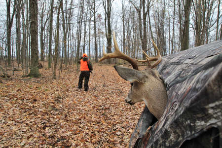 Deer hides in a hunters blind, while he searches for the elusive buck
