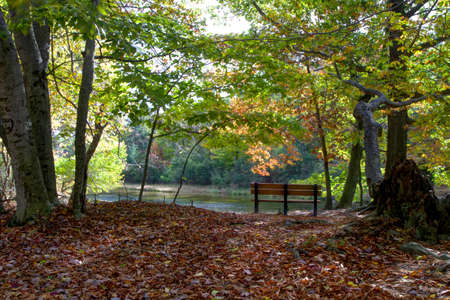 ludington: Autumn foliage surrounds a single park bench overlooking the Big Sable river  Ludington State Park  Ludington, Michigan