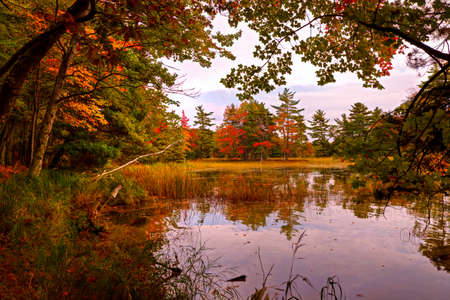 ludington: Fall foliage reflecting in the still waters of an inland pond  Ludington State Park  Ludington, Michigan   Stock Photo