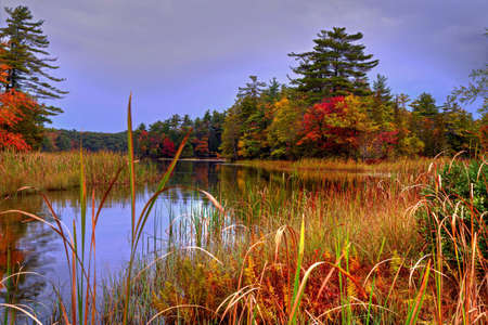 ludington: Fall in forest wetlands  Ludington State Park  Ludington, Michigan