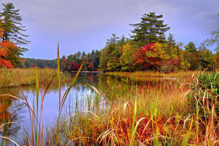 reflect: Protected wetlands reflect the beauty of the fall forest  Ludington State Park  Ludington, Michigan
