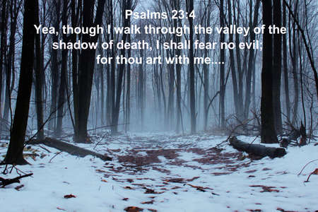 Barren forest shrouded in fog with inspirational text from the book of Psalms
