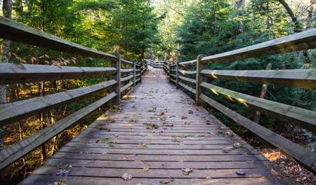 Elevated portion of the North Country Trail keeps hikers high and dry as they trek through Tahquamenon Falls State Park  Paradise, Michigan   photo