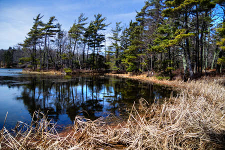 ludington: Shores of a protected wilderness wetland  Ludington State Park  Ludington, Michigan
