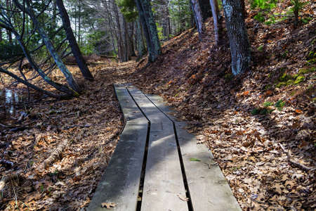 ludington: Boardwalk hiking trail through a desolate barren wilderness  Ludington State Park  Ludington, Michigan