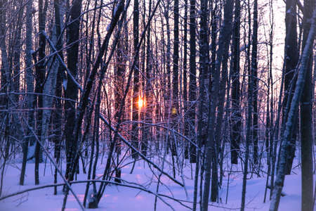 Sunshines through the trees of a forest shrouded in fresh fallen snow