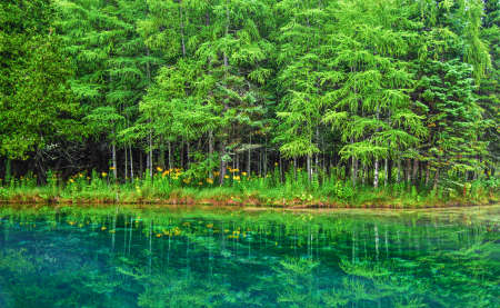 upper peninsula: Kitchitikipi Springs is the largest freshwater spring in the state of Michigan  Palms Book State Park  Manistique, Michigan