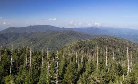hemlock: Muerte De Un Bosque. Troncos muertos de los poderosos Hemlock del este dan testimonio de la fragilidad de nuestro medio ambiente. Parque Nacional Great Smoky Mountains.