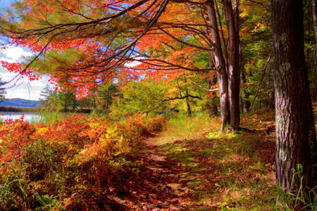 ludington: Hiking trail through a beautiful autumn forest in Ludington State Park. Ludington, Michigan. Stock Photo