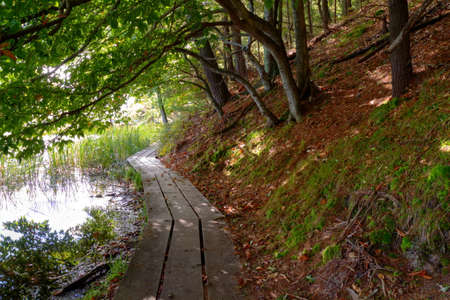 ludington: Boardwalk trail along the shore of a protected wetland habitat in Ludington State Park. Ludington, Michigan. Stock Photo