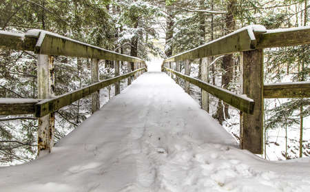 blanketed: Wooden footbridge over a ravine blanketed in fresh fallen snow.