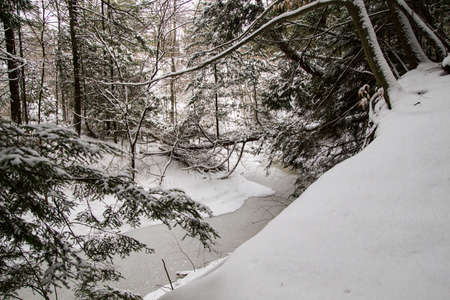 blanketed: Wilderness stream and forest blanketed in fresh fallen snow.