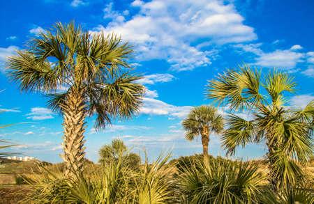 sunny south: The protected coastal habitat of Myrtle Beach State Park in sunny South Carolina. Stock Photo