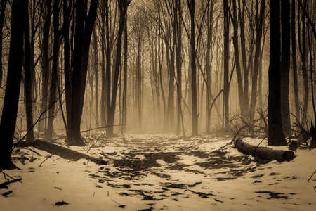 shrouded: Snow covered trail through a forest shrouded in fog. Stock Photo