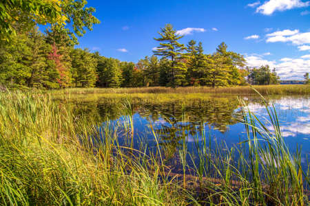 ludington: Save The Wetlands. Shore of a wetland habitat showcases the beauty of these wild ecosystems. Ludington State Park. Ludington, Michigan. Stock Photo