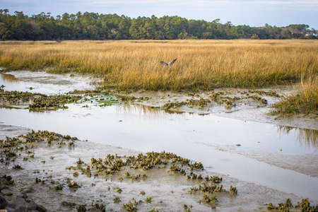 bayou swamp: Beauty Of The Lowcountry. Lowcountry wetlands in Huntington Beach State Park is a haven for birdwatchers and wildlife. Murrells Inlet,  South Carolina. Stock Photo