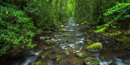 great smoky national park: River rushes through the lush spring foliage of the Great Smoky Mountain National Park. Gatlinburg, Tennessee