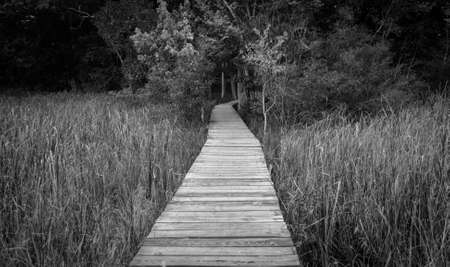 end of the trail: The path to nowhere. Lonely and remote boardwalk leads into a dark forest.