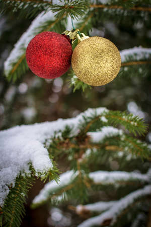 Seasons Greetings. Red and gold Christmas bulbs hanging from a snow covered pine tree with copy space. Stock Photo