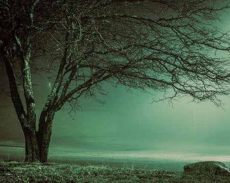 enveloped: The Fog. Lone bare tree enveloped in a dense fog.