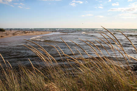 ludington: Coastal Background. Dune grass blows in the breeze as waves roll in on the sandy beach in the background.