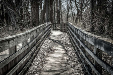 desolate: Walking Home. Long lonely trail through a desolate forest. Stock Photo