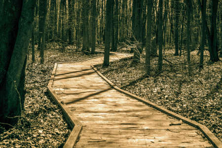 forested: The Long Walk. Forested trail winds through a remote forest.